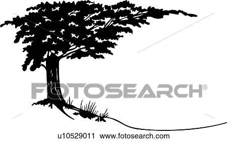 clipart of landscape country cypress tree u10529011 search rh fotosearch com Louisiana Bald Cypress Tree Drawing bald cypress tree vector
