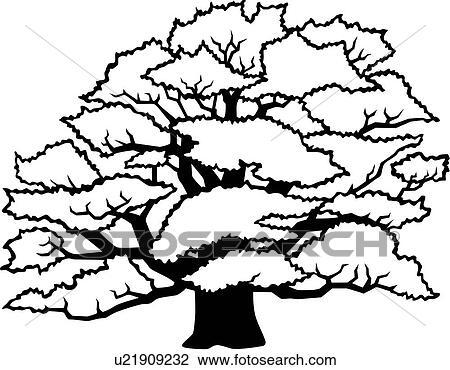 Clipart Of , Common Oak, Seasons, Tree, Winter, Varieties ...