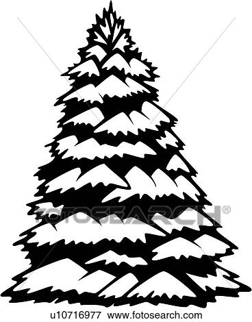 Tree varieties white spruce winter view large clip art graphic