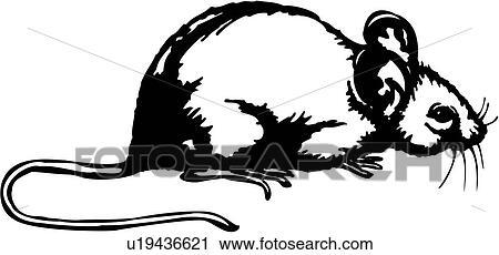 Clipart tier mäuse maus nagetier rat fotosearch suche clip