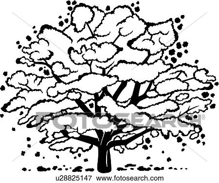 Cherry seasons tree winter varieties view large clip art graphic