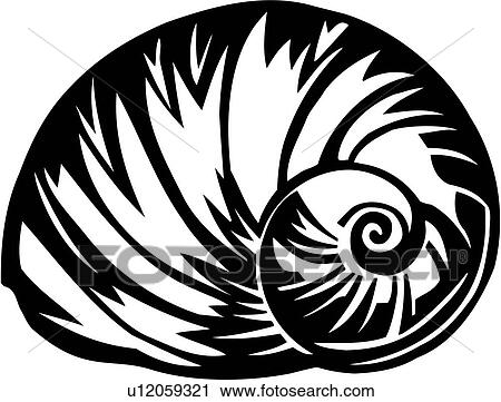 Ocean Shells Drawing Moon Shell Nautilus Ocean