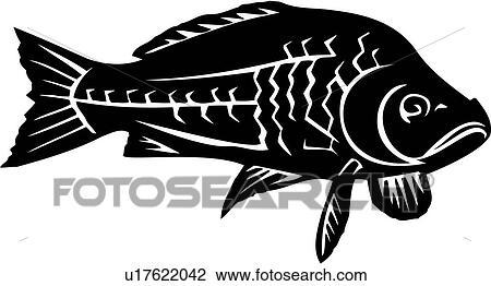 Clipart Of , Animal, Common Carp, Fish, Species, U17622042 ...