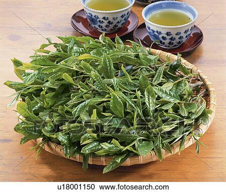 Черный и зеленый чай сравнение