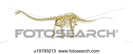 Dessin diplodocus squelette dinosaure typon u19793213 recherchez des cliparts des - Dessin de diplodocus ...