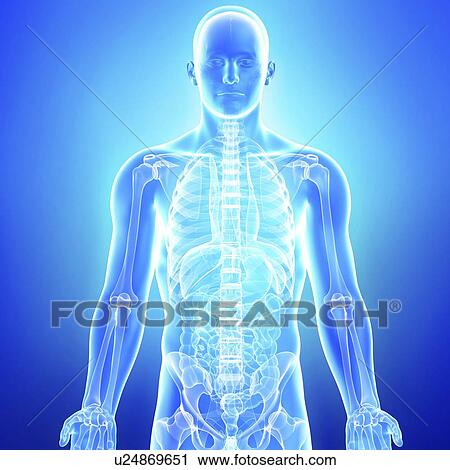 human anatomy research paper Read online human anatomy and physiology research paper topics as pardon as you can discover the key to complement the lifestyle by reading this human anatomy and physiology research paper topics this is a nice of lp that you require currently.