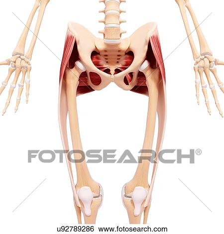 Clip Art of Human hip joint, artwork u89730132 - Search Clipart ...