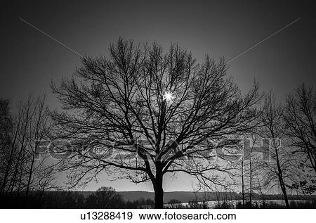 Banque d 39 illustrations arbre nu u13288419 recherche de - Dessin arbre nu ...