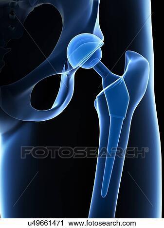 Stock Illustration of Human hip musculature, artwork u92789286 ...