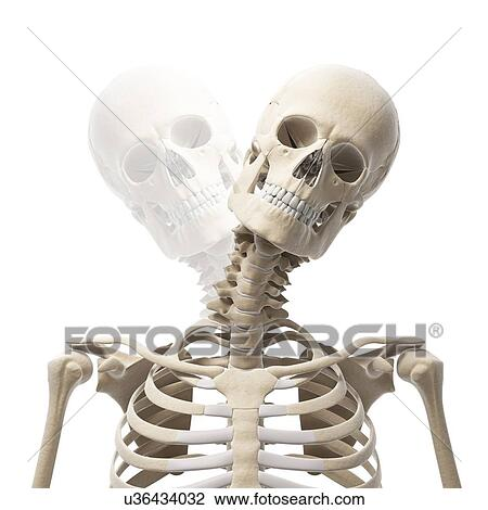 Clip Art Of Human Skull And Neck Bones Artwork U36434032 Search