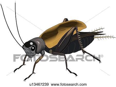 コオロギの画像 p1_28