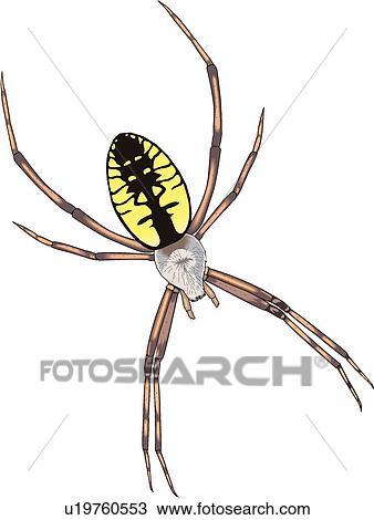 手绘图 - 蜘蛛