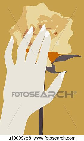 Stock illustration of close up of a person s hand touching a rose