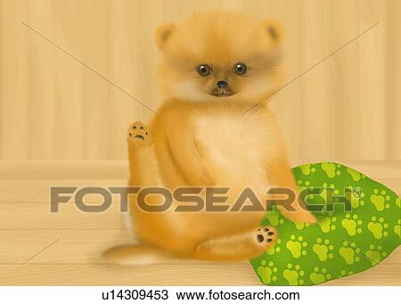 drawing pomeranian puppy sitting on wooden floor front view fotosearch search clipart