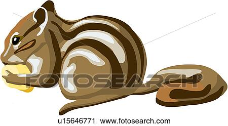 Clipart of squirrel, animal, land animal, mammal, vertebrate ...