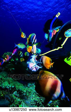 Stock photography of diving vacation feeding diving for Diving and fishing mural