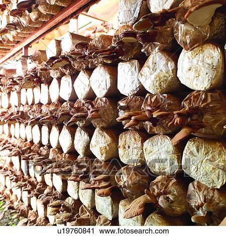 banques de photographies plante agriculture cultiver planter champignon u19760841. Black Bedroom Furniture Sets. Home Design Ideas