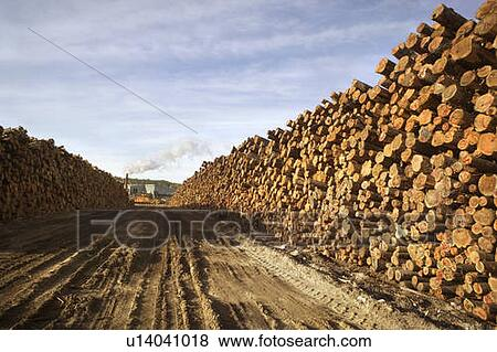 the russian timber resources Russia – the enigma r u s s i a the enigma forest resources & softwood saw log 3 china remains main market for russian timber.