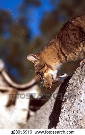 Archivio fotografico gatto con uccello in relativo for Gatto clipart
