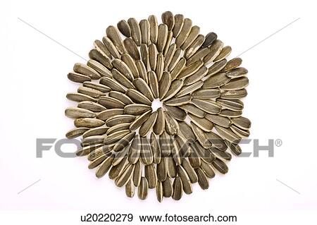 david sunflower seeds clipart - photo #23