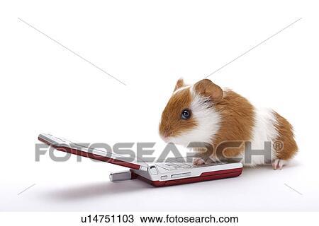 Hamster mobil
