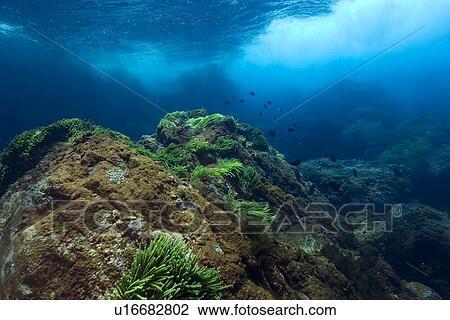 Underwater substrate  St  Peter and St  Paul s rocks  Brazil  Atlantic    Underwater Ocean Rocks