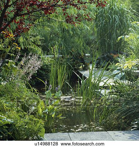 Immagini erbe accanto stagno in giardino paese for Stagno in giardino