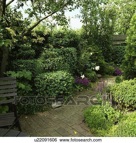 Banque d 39 images escalade hortensia blanc pivoine et pourpre fleuri sauge coup - Entretien et coupe des hortensias ...
