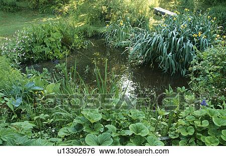Stock images of lush plants around pond in country garden for Plants around ponds