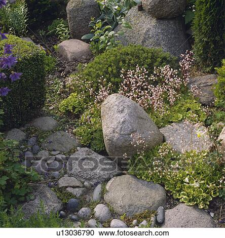 Stock photography of large smooth stones in rockery garden for Smooth stones for landscaping