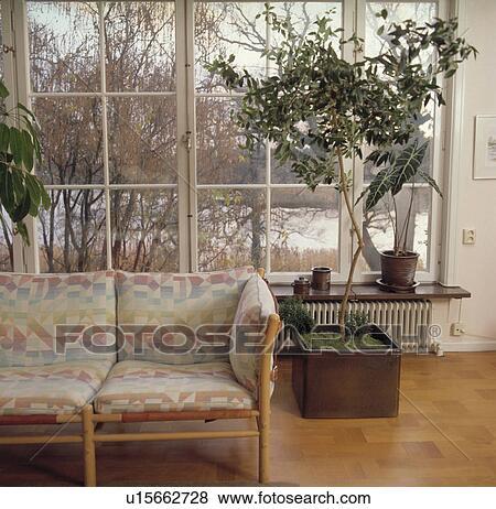 immagini - alto, houseplant, in, vaso, davanti, grande, finestra ... - Divano Davanti Finestra