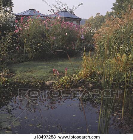 Immagini stagno in giardino paese in estate for Stagno in giardino