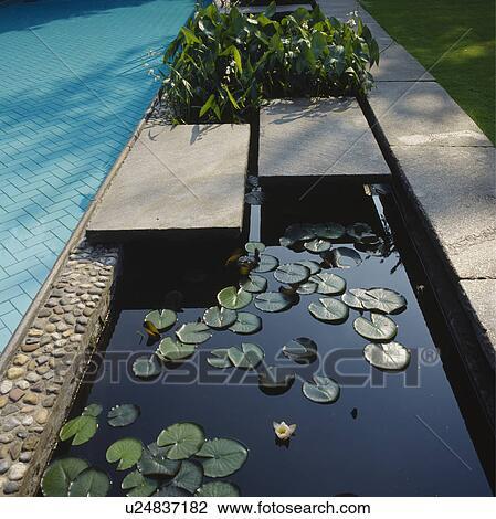 stock foto nahaufnahme von wasserlilien auf. Black Bedroom Furniture Sets. Home Design Ideas
