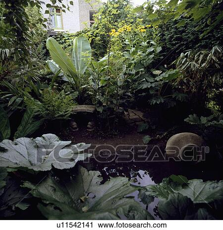 Stock photography of natural pond in town garden with lush for Natural pond plants