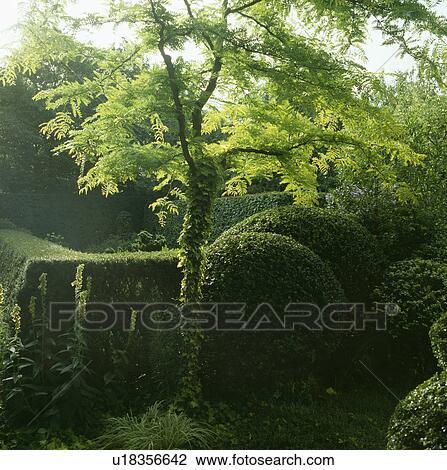 Archivio fotografico piccolo albero e cimare barriere for Albero per piccolo giardino
