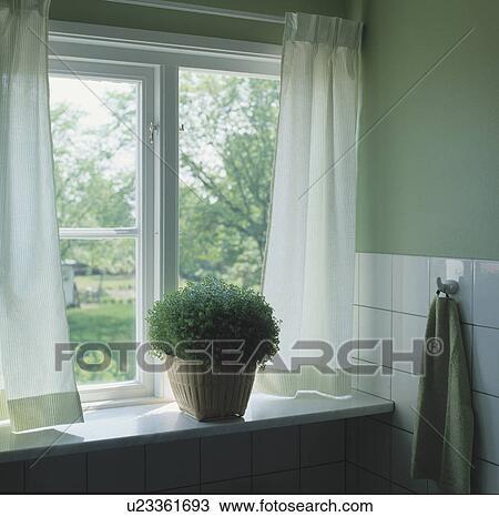 stock foto gr n helzine in korb auf fensterbank mit wei vorh nge fenster u23361693. Black Bedroom Furniture Sets. Home Design Ideas