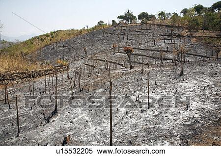 Stock Image of timor leste slash burn farming in east asia ...