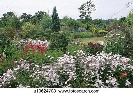 Pictures Of Pink Daisies In Summer Garden Border With Large Lake