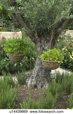 Stock Photograph Of Mediterranean Vegetable Garden With