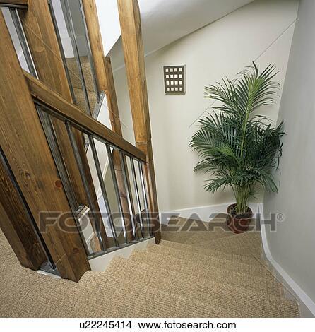 stock foto sehen unten treppenaufgang mit sisal teppich to gro houseplant auf ecke. Black Bedroom Furniture Sets. Home Design Ideas