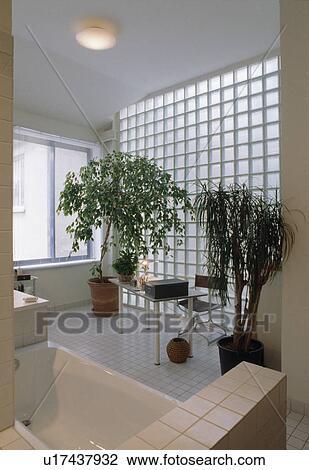 Colecci n de foto houseplants y ladrillo de vidrio - Banos con paredes de cristal ...