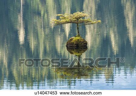 Colecci n de foto bonsai rbol hoja perenne hada lago for Ver fotos de arboles de hoja perenne