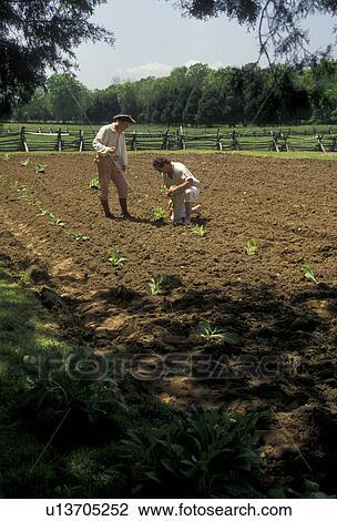 Stock Photo of George Washington, farming, birthplace, tobacco ...