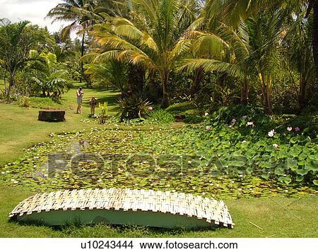 Stock photo of poipu kauai hi hawaii south shore - National tropical botanical garden ...