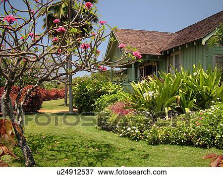 Picture of Poipu Kauai HI Hawaii South Shore Allerton Garden