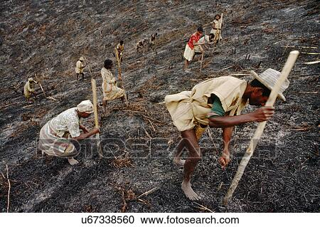 Stock Photography of Slash and burn famers planting rice ...