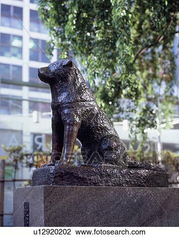 Stock Photo of Hachiko, Shibuya, Tokyo, Japan u12920202 - Search Stock Photog...