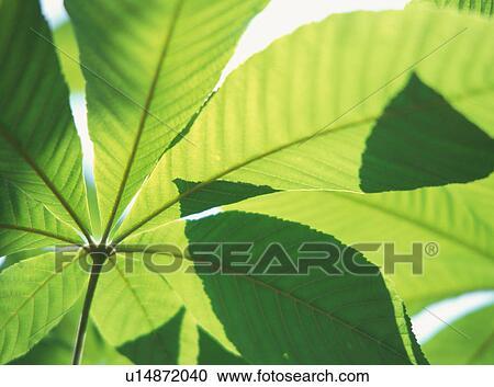stock fotografie nahaufnahme von dass hell gr ne bl tter von a pflanze u14872040. Black Bedroom Furniture Sets. Home Design Ideas