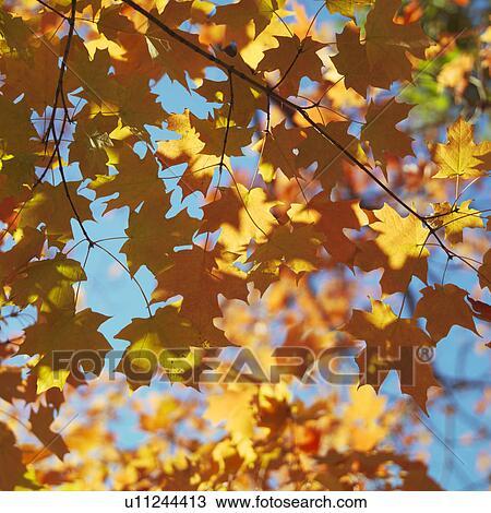 Bonsais-Baum stockbild Bild von asiatisch, bonsais