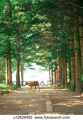 Stock photo of deer nature tree road scenery film for Deer scenery